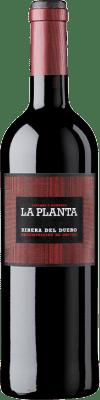 Arzuaga La Planta Tempranillo Ribera del Duero Joven 75 cl